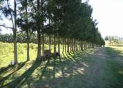 Hermosa chacra 5 hectarea arbolada en ruta 39