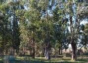Campo 47 hectareas. plantado de eucaliptus. campo agrícola/ ganadero.