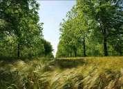 Forestación robles y nogales vendo